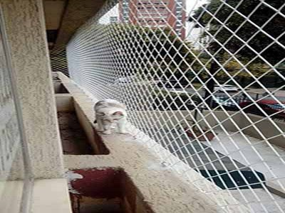Redes de proteção para Gatos em Capão Raso