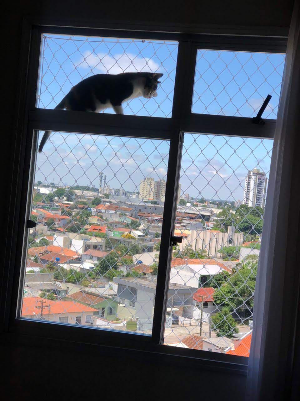 Redes de proteção para Gatos em Guabirotuba