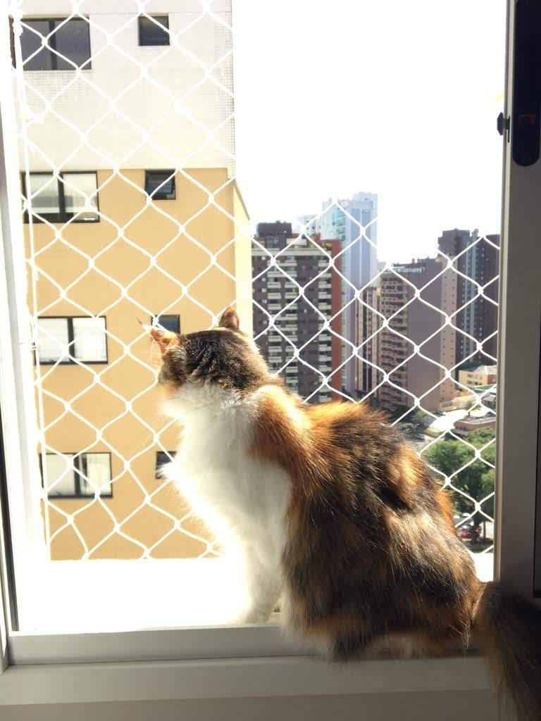 Tela de proteção para Gatos em Boa Vista