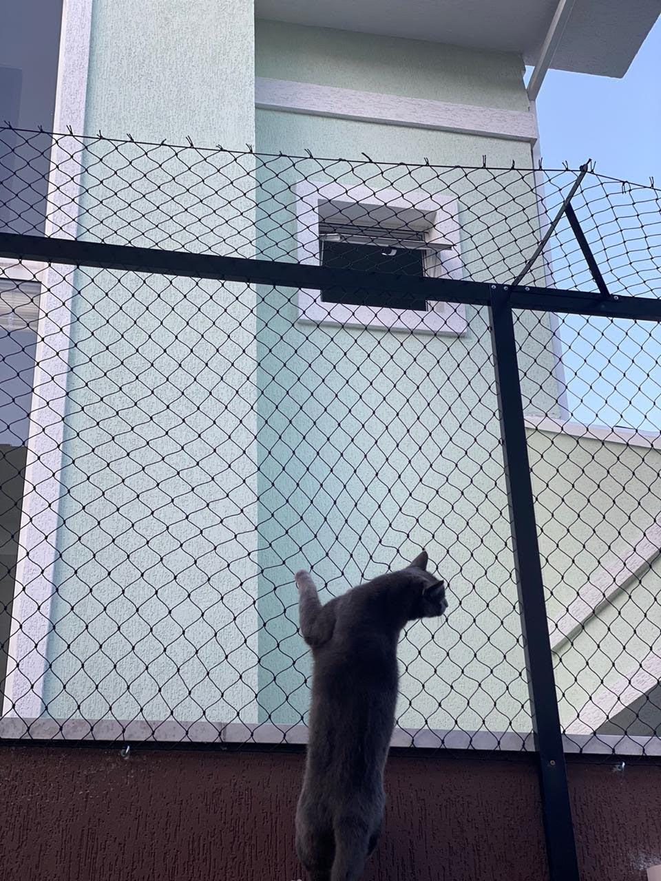 Tela de proteção para Gatos em Capão Raso