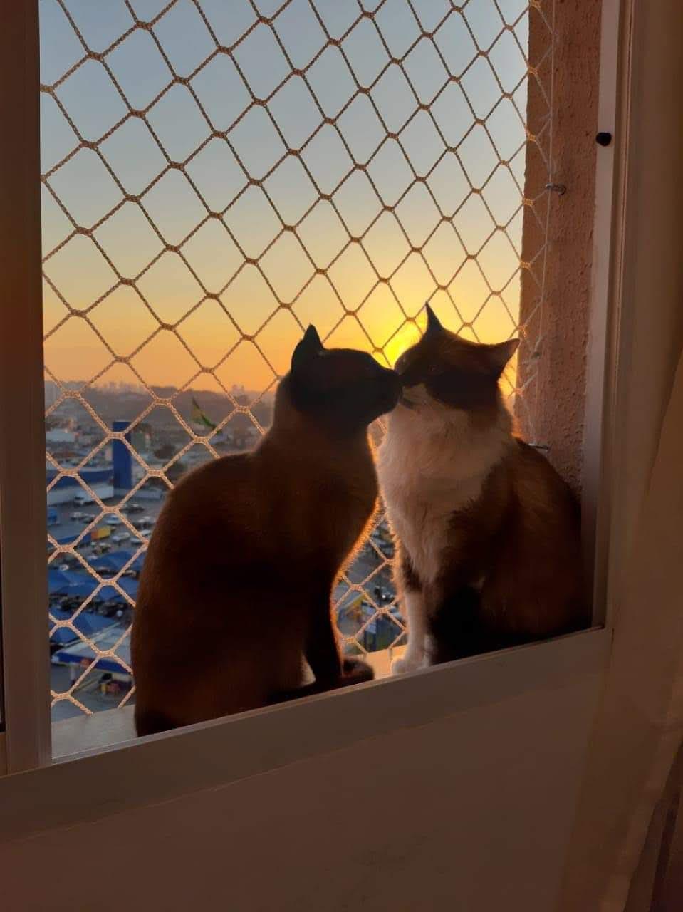 Telas e redes de proteção para gatos - Tela segura gatinho