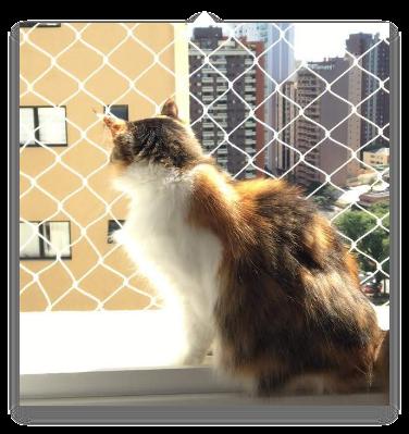 Tela de proteção para gatos - Tela Segura Gatinho